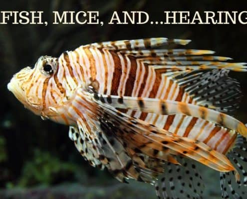 Bay Area Hearing Service - Zebrafish, Mice, and...Hearing Loss